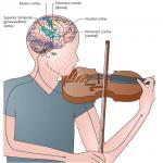 Musik i hjernen og kroppen